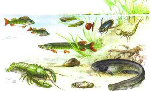 Животные различных мест обитания в водной среде