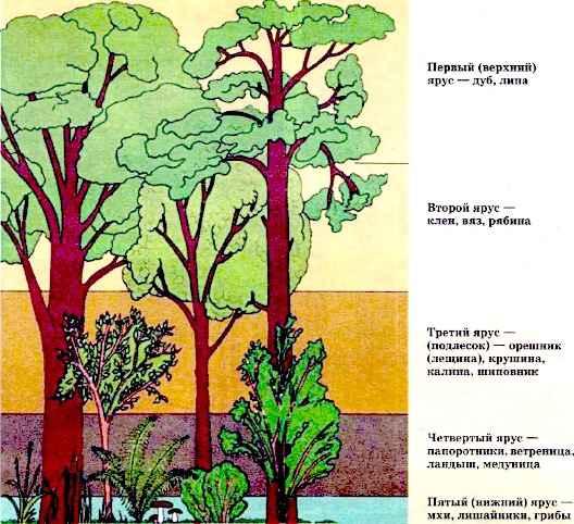 Многообразие дикорастущих растений
