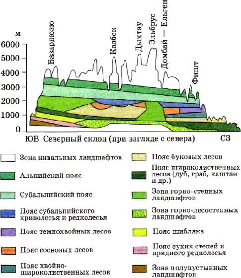 Почвы Черноморского побережья...  Рис. 96.  Высотная поясность Большого Кавказа.